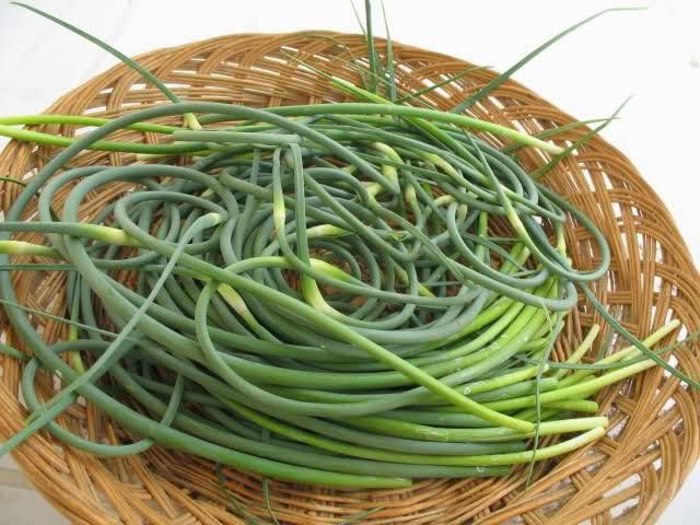Vivere nella terra di mezzo tolle dell 39 aglio sott 39 olio for Aglio pianta