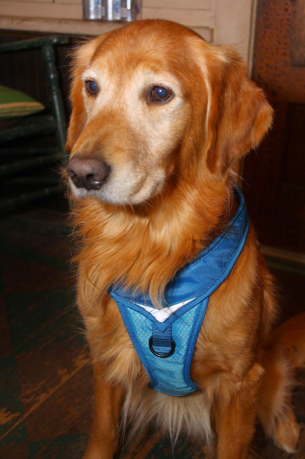 The Writer S Dog Kurgo Go Tech Adventure Harness Review