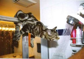 funny picture cat douche
