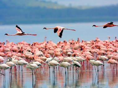 Nakuru classics