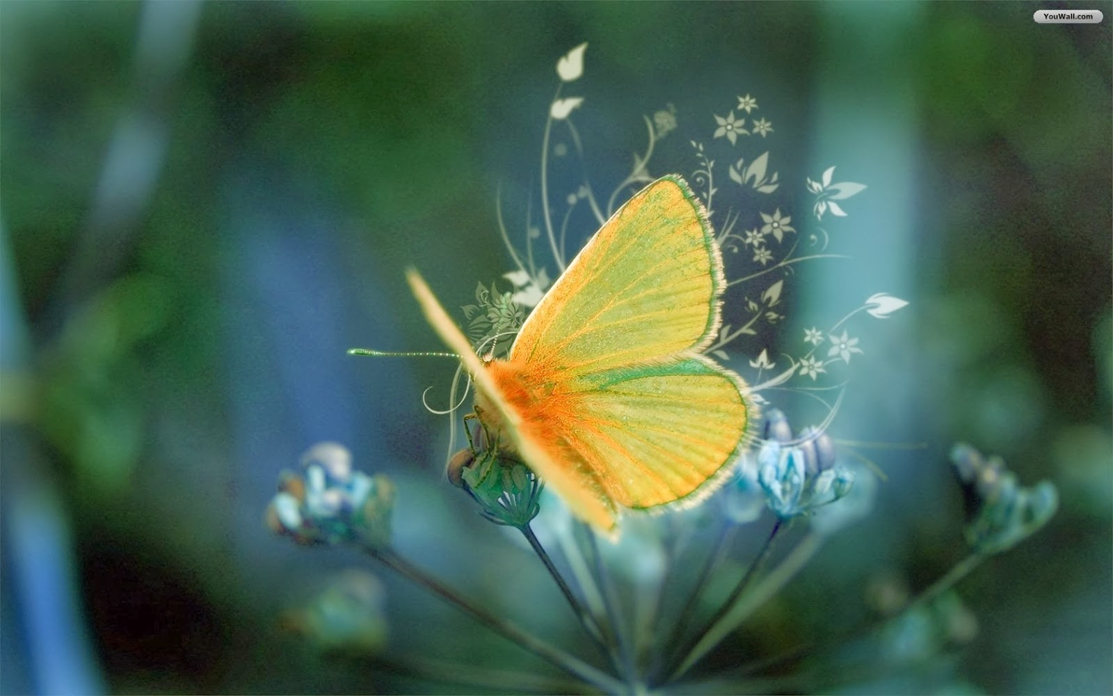 butterfly wallpapers flying - photo #13