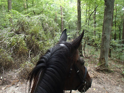 konie, jazda konna, jazda w terenie, pensjonat dla koni w Węgrzcach