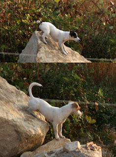 Mountaineering puppies