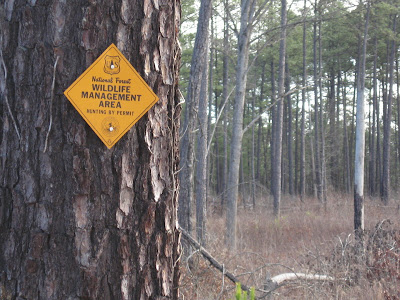 WMA land in Sumter National Forest