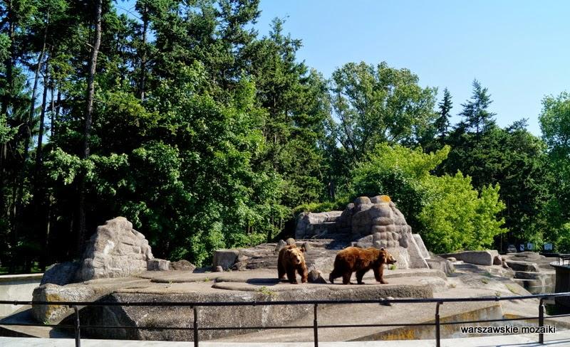 miśki Praga Warszawa niedźwiedzie