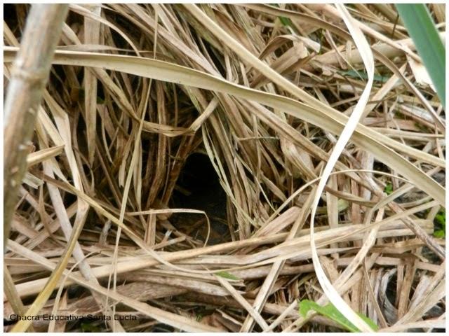 Túnel de entrada al nido, apereá - Chacra Educativa Santa Lucía