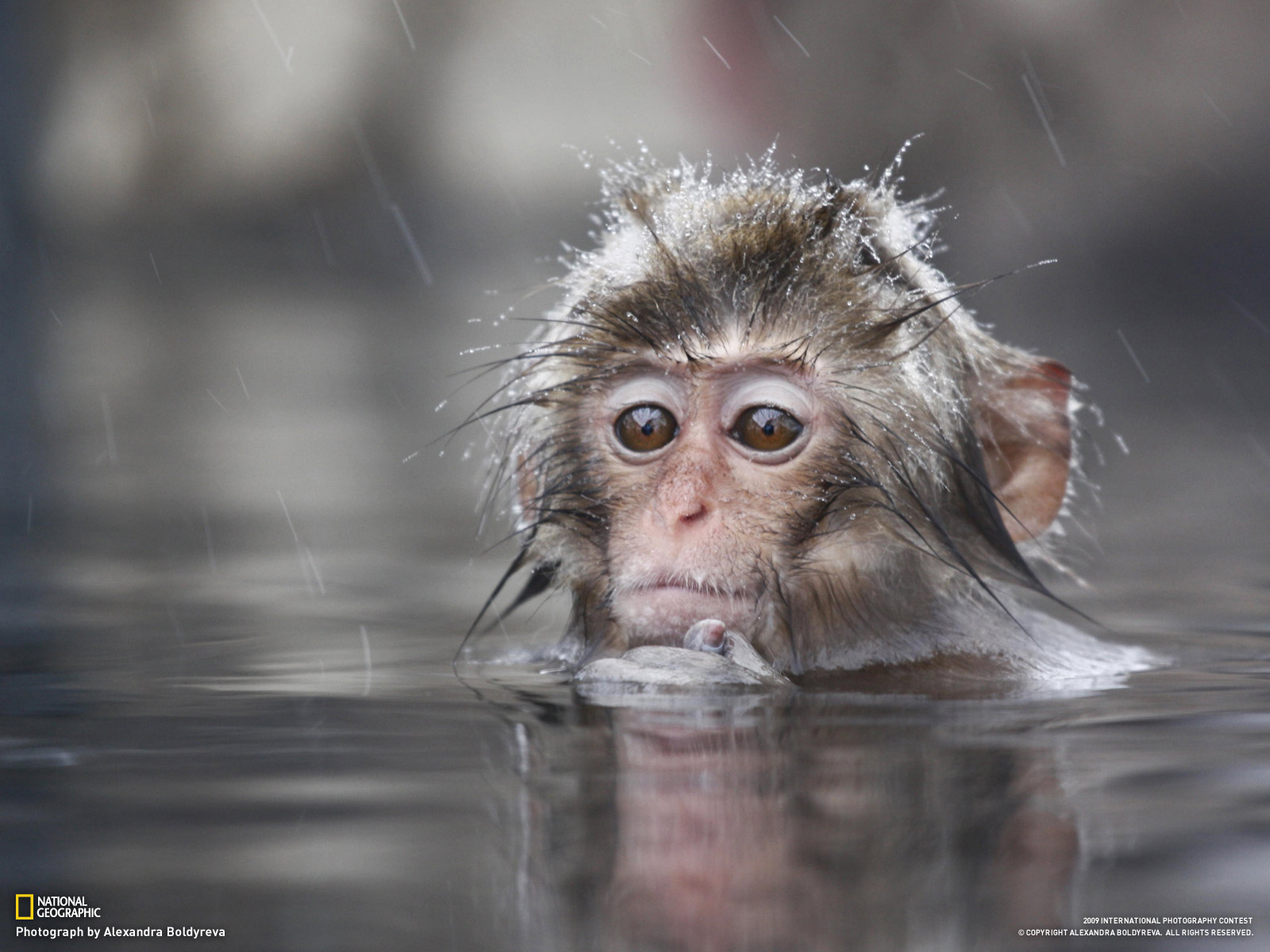 monkey hd wallpapers - image wallpapers
