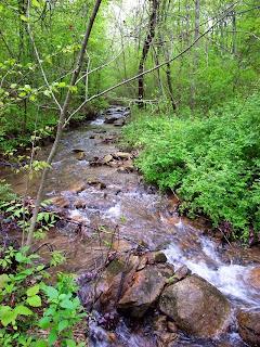 In the woods in Virginia