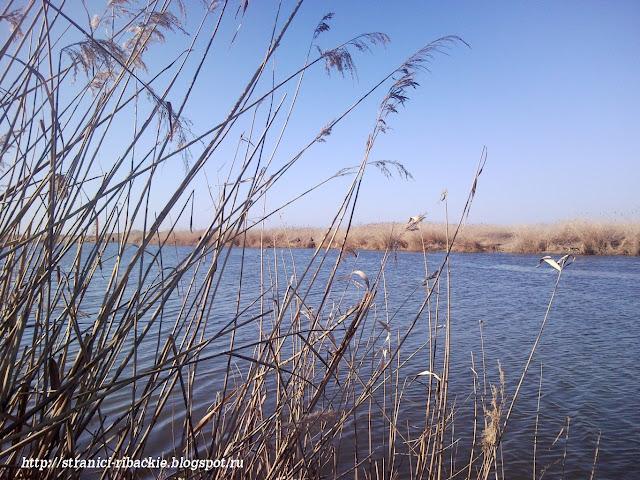 лов тарани на Бриньковском канале