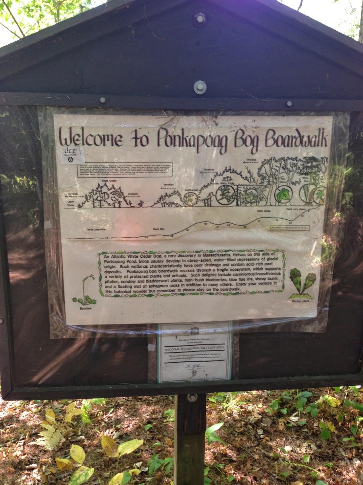 The Nature Playground Unique Cedar Bog Featuring Carnivorous Plants - The-unusual-cedar-residence