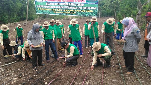 Wabup Hadiri Penanaman Perdana Kedelai di Desa Kayu Aro Ambai