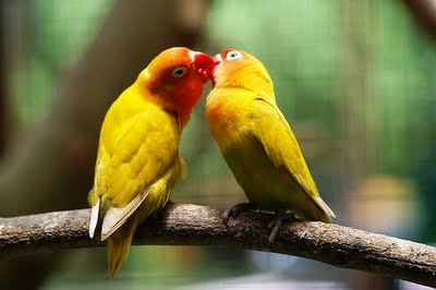 Lovely Birds Wallpapers