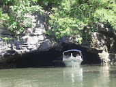 mangrove tours