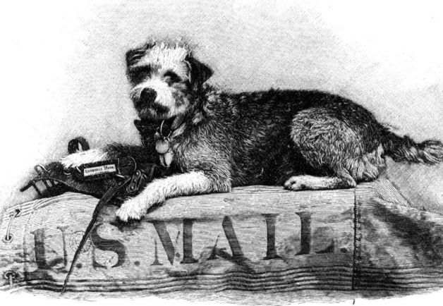 Owney the unofficial mascot of the Railway Mail Service