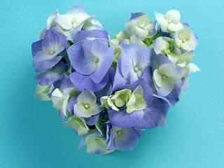 hortensias azules con forma de corazón