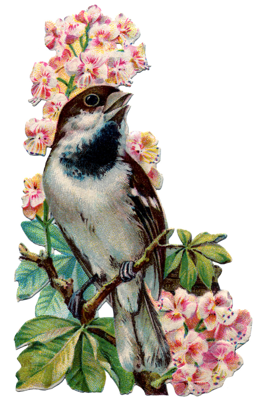 mi baul del decoupage  the beautiful vintage birds