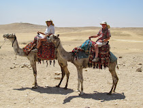 Transport around The Great Pyramids of Giza: camel power !