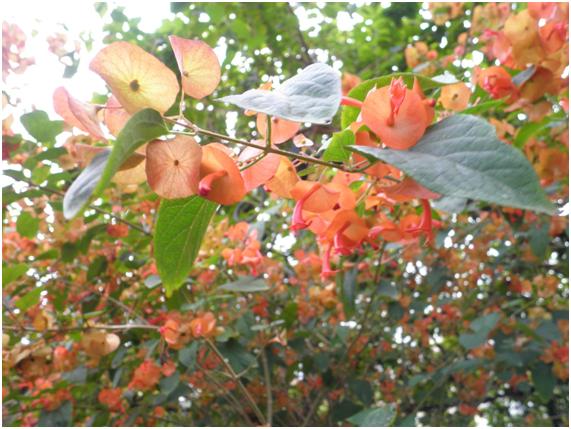 Plantas arom ticas en el jard n de bernadette i - Plantas aromaticas jardin ...
