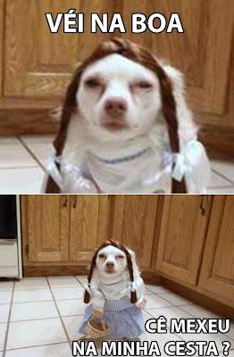 memes véi na boa, memes da internet, memes com animais