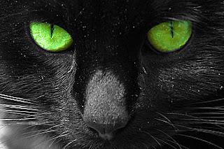 อาถรรพย์ของแมว