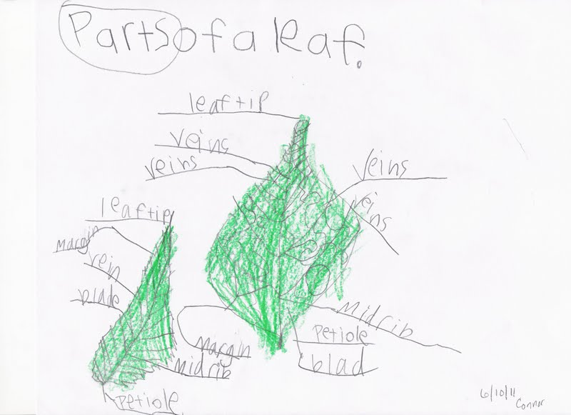 This Side Up  Science  Learning About Plants  Lesson 5  Leaves