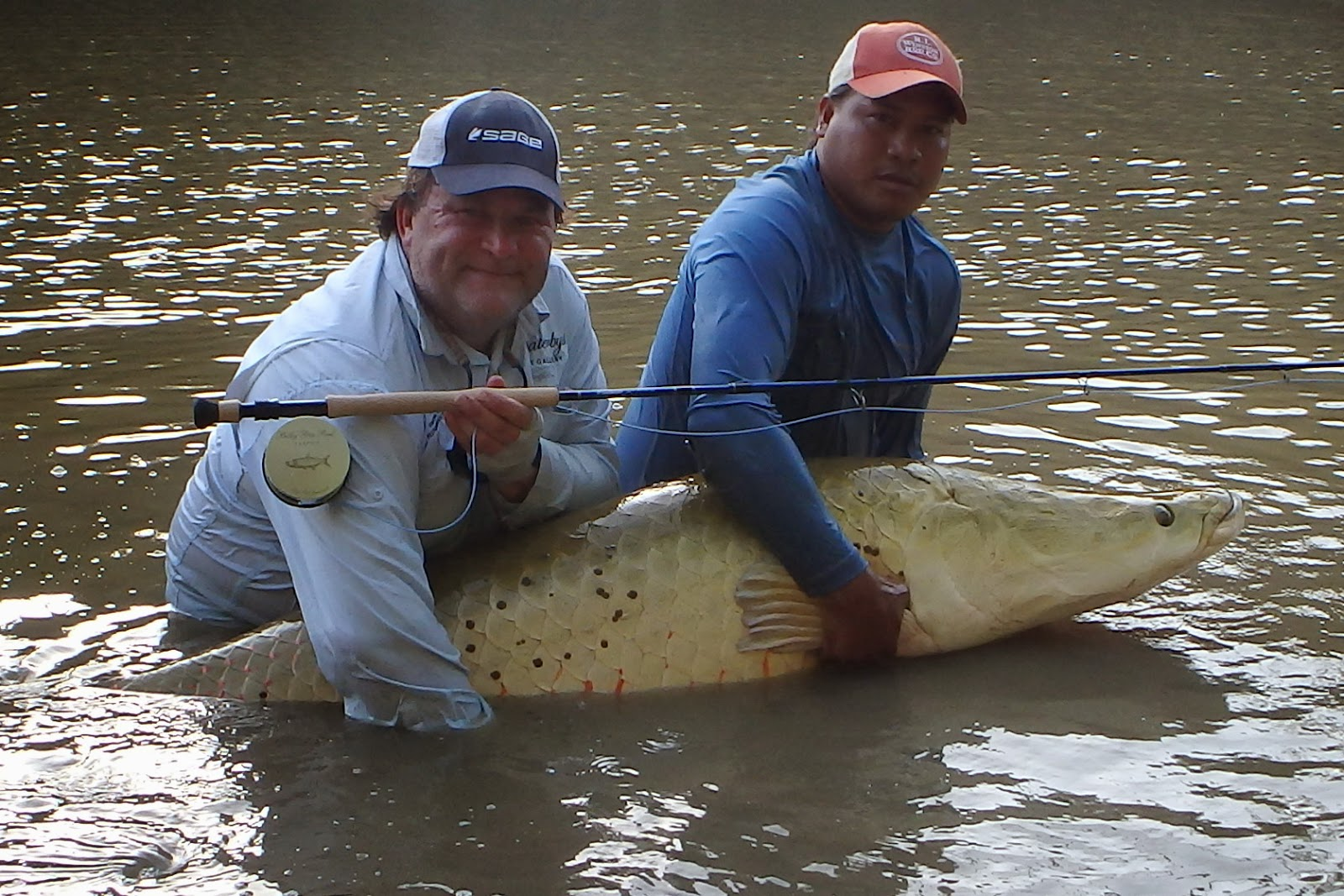 Big Fishes Of The World Apapaima Pirarucu Page 2