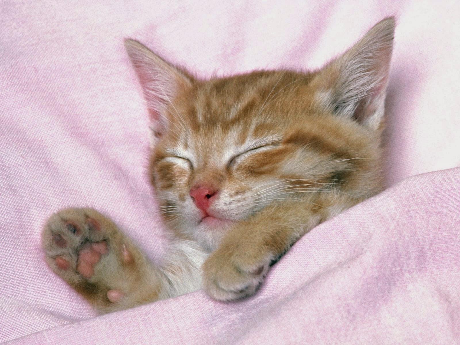Free kitty pics 48
