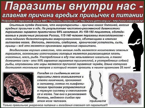 как долго живут паразиты в организме человека