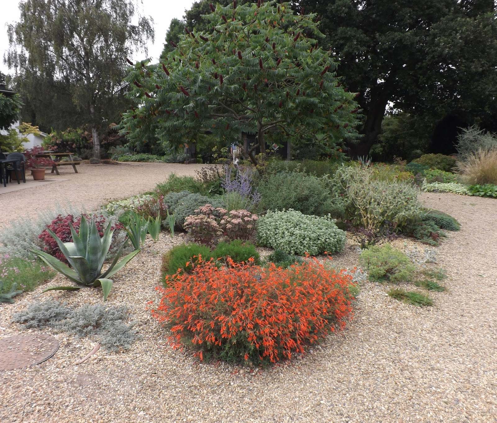 Ramblings from an english garden beth chatto 39 s garden part 1 for Les plantes exterieur