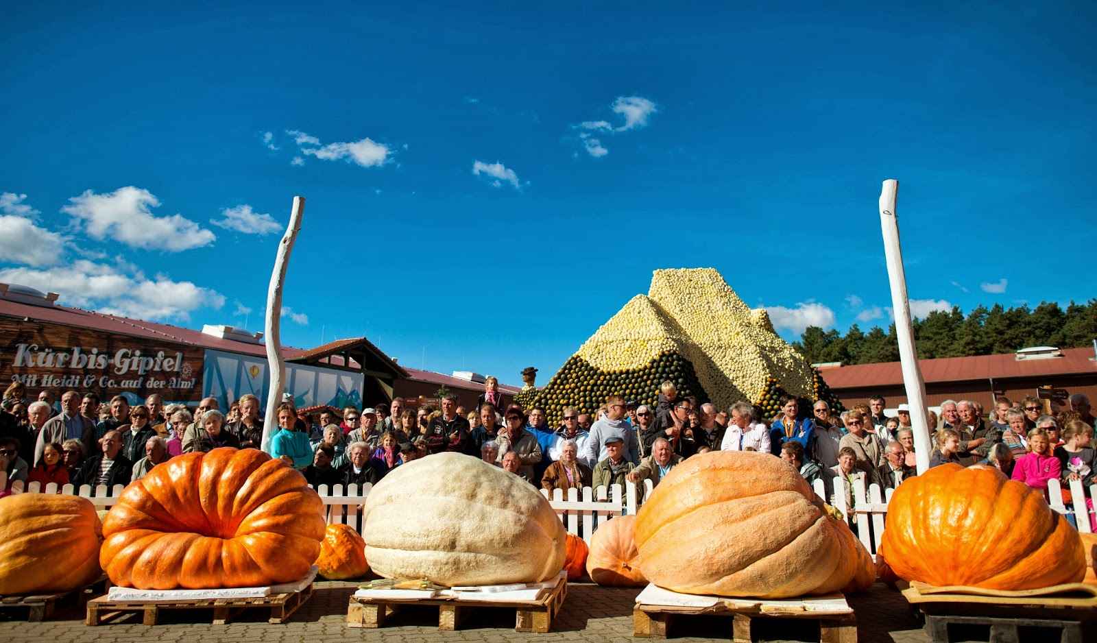 Agriculture, Germany, Klaistow, Pumkpin Weight Championship, Pumpkin, Competition, Vegetable, World Biggest Pumpkin, Business, News,