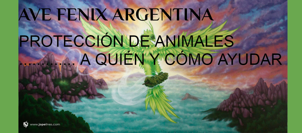 AVE FENIX ARGENTINA
