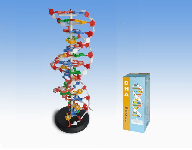 Unseen Rare Collection  Dna Structure Dna Synthesis Dna Strand Dna Sequencing Unseen Rare Hd Diagram