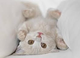7 Consejos si te regalan un gato
