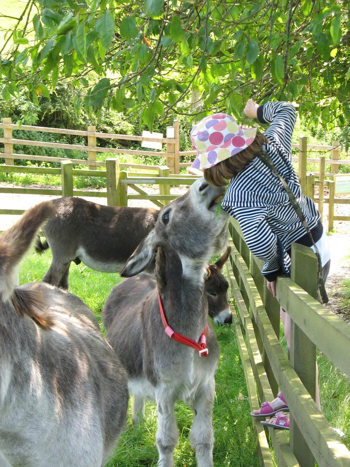 tawny donkey