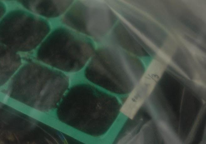 Grönt planteringstråg som skymtar bakom plast.