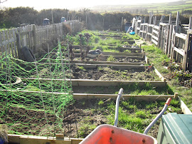The old allotment