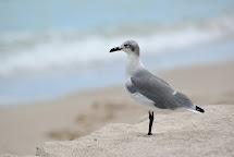 Bank Of Miami Beach Seagulls