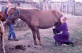 kımız at sutu