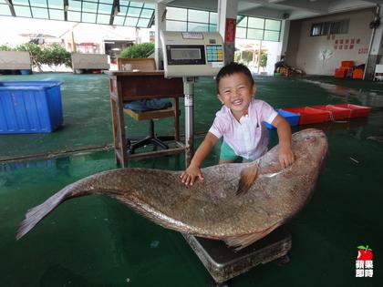 東石鄉漁民 鮸魚