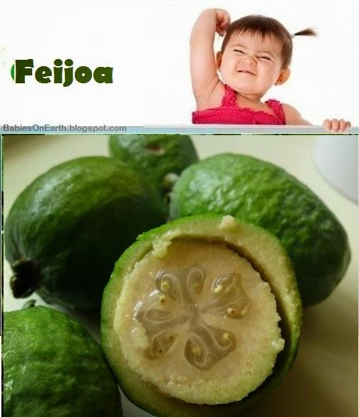 Baby Feijoa