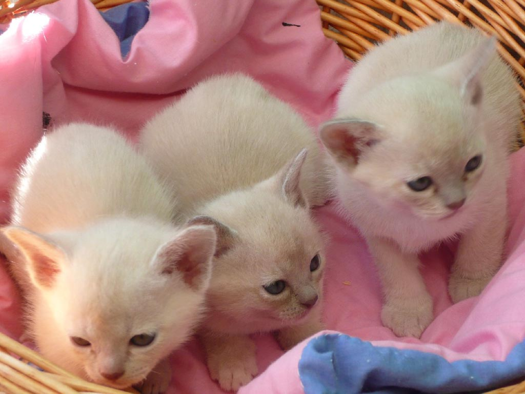 cute cat and kitten picture cute white brown kittens pictures