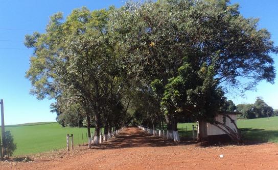 Vlog - Norte do Paraná em Arapongas e Lunardelli