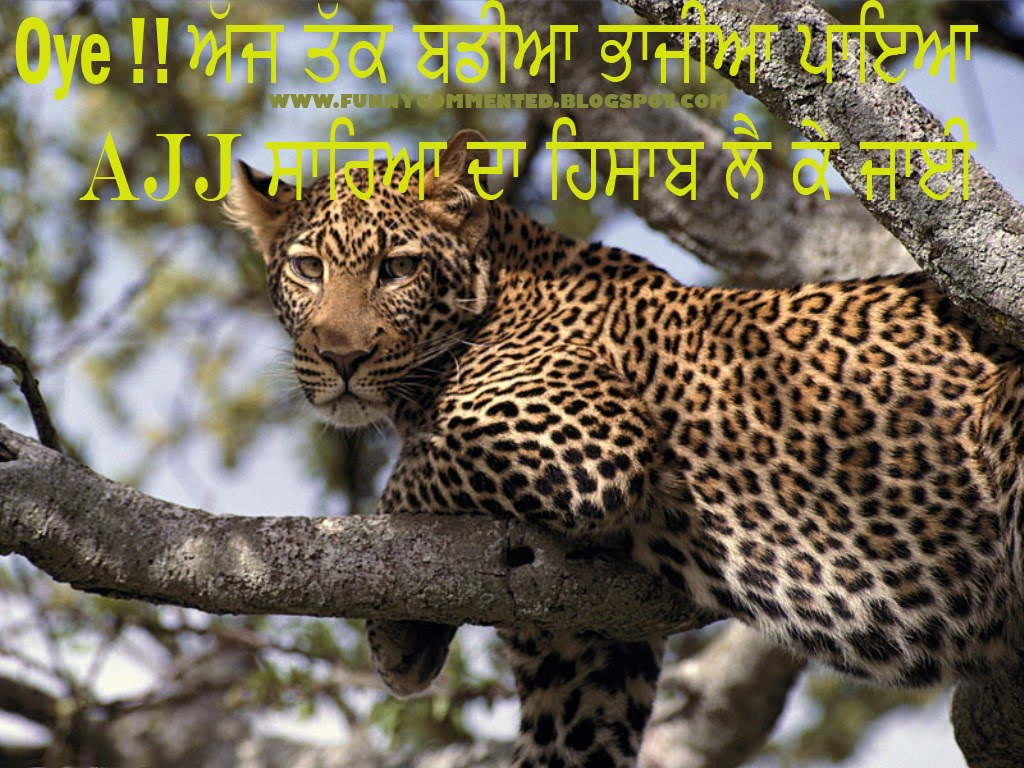 FUNNY COMMENTED | SMS | POEMS | VIDEOS | HD WALLPAPERS: LEOPARD FUNNY ...
