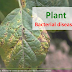 Common plant bacterial diseases