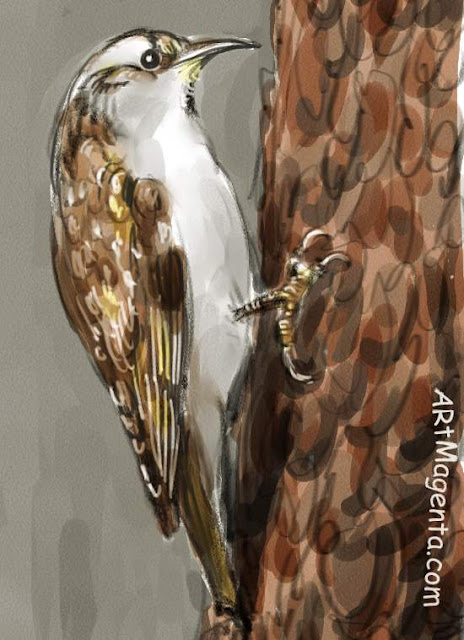 En  fågelmålning av en Trädkrypare  från Artmagentas svenska galleri om fåglar.
