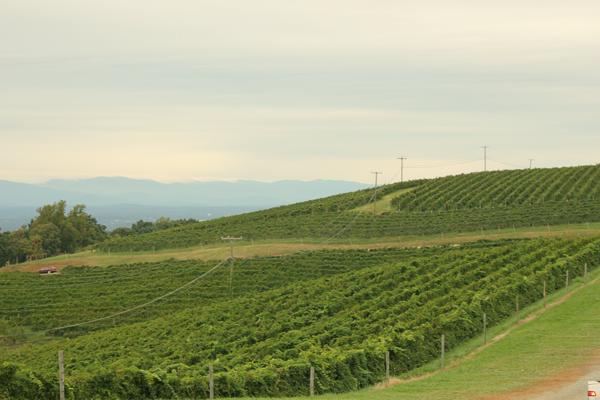 carter-mountain-orchard