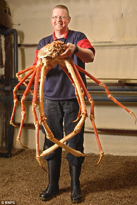 deep is already the biggest crab ever seen in Britain largest crab