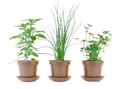 Hierbas organicas