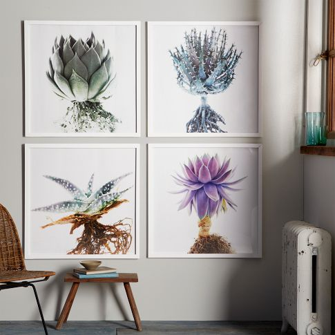 Succulents, flowers, art, modern
