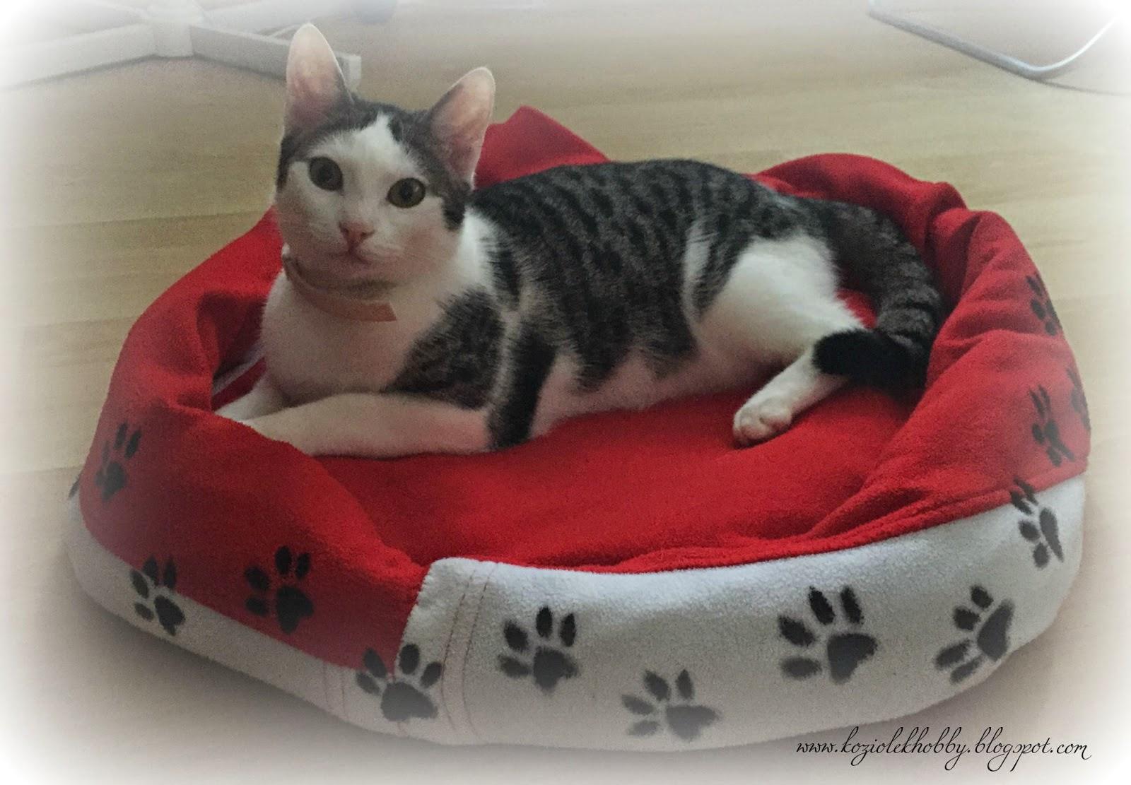 Lozko dla kota ze starej bluzy.